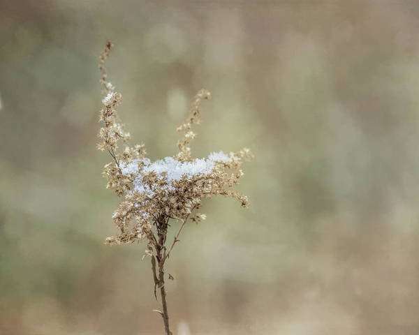 Wall Art - Photograph - Snowy Silence by Susan Capuano
