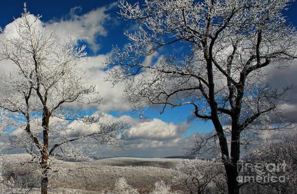 Photograph - Snowy Sunday by Lois Bryan