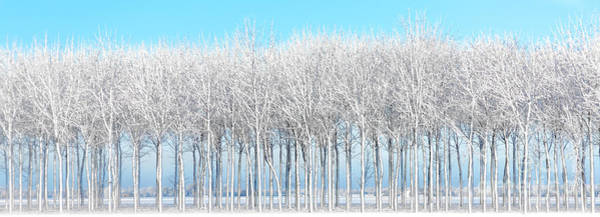 Photograph - Snowy Sunrise At Walnut Grove by Michael Arend