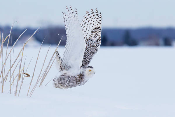 Wall Art - Photograph - Snowy Take Off by Mircea Costina Photography