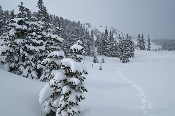 Photograph - Snowy Tracks At Berthoud Pass by Cascade Colors