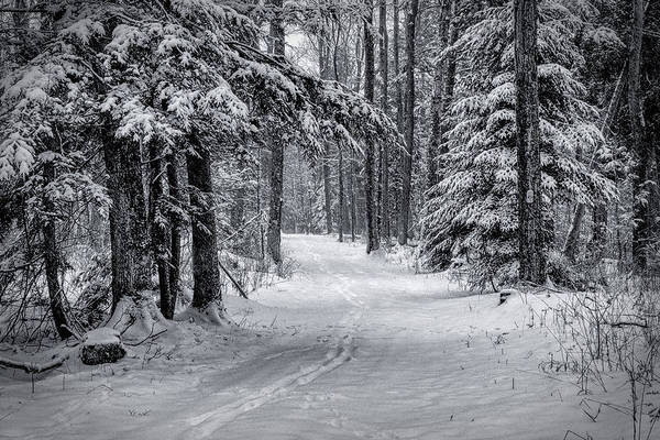 Photograph - Snowy Trail by David Heilman