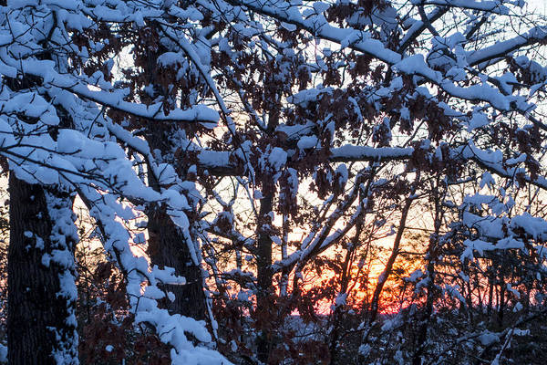 Photograph - Snowy Tree Sunset by Toby McGuire