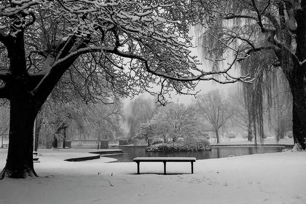 Photograph - Snowy Tree The Public Garden Boston Ma Bench Black And White by Toby McGuire