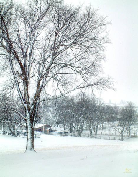 Photograph - Snowy Trees by Sam Davis Johnson