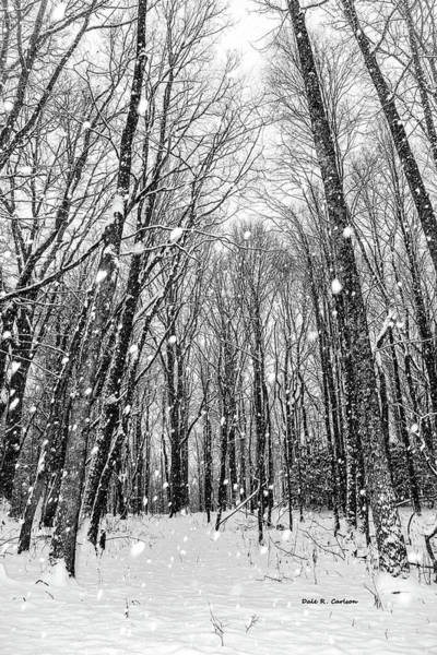 Photograph - Snowy Woods by Dale R Carlson