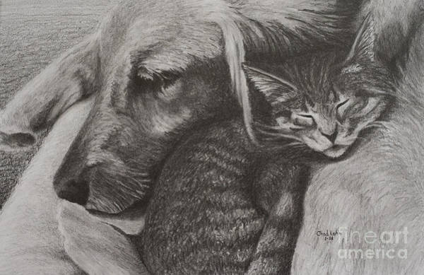 Golden Retriever Drawing - Snuggle Buddies by Chad Keith