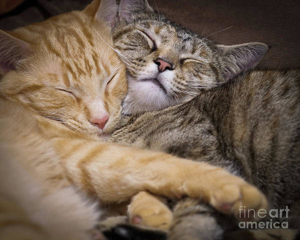 Photograph - Snuggle by Patrick M Lynch