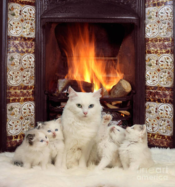 Photograph - Snuggle Up With Mother By The Fire by Warren Photographic
