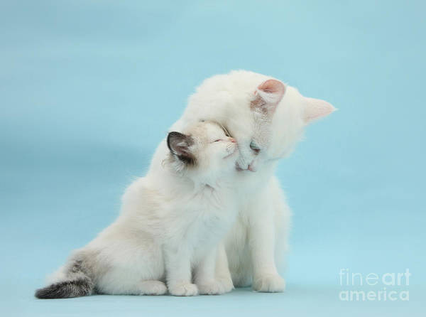 Photograph - Snuggle Up With Mother by Warren Photographic