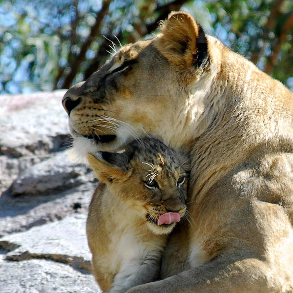 Photograph - Snuggles by Howard Bagley