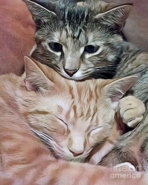 Photograph - Snuggling Kittens by Patrick M Lynch