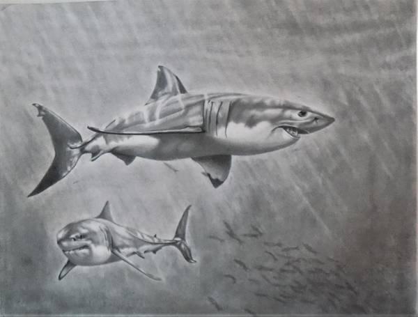 Drawing - So. Cal Game Fish by Chuck Caputo