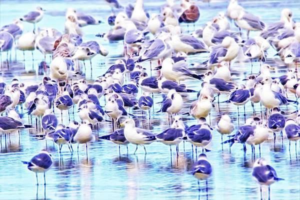 Photograph - So Many Birds by Alice Gipson