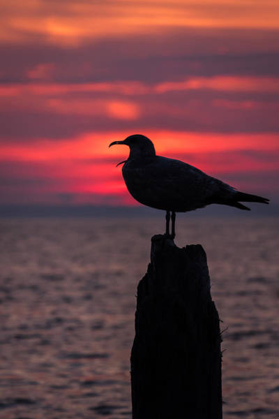Photograph - So Tired Seagull Seaside Park Nj by Terry DeLuco