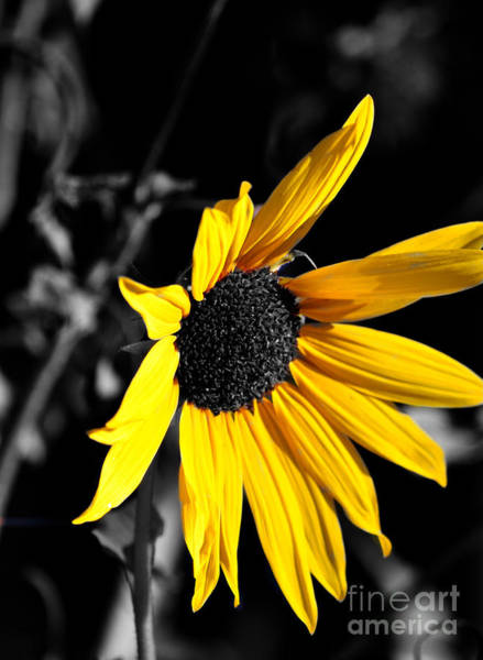 Photograph - Soaking Up The Yellow Sunshine by Clayton Bruster