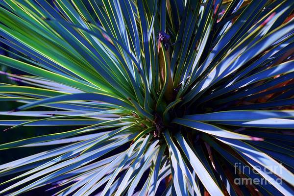 Yucca Elata Wall Art - Photograph - Soaptree Yucca Abstract by Janet Marie