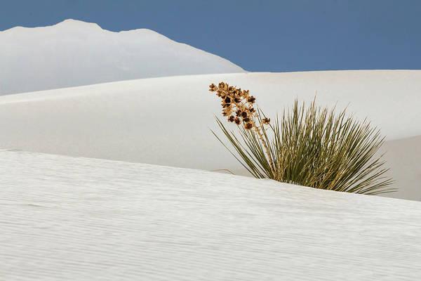 Yucca Elata Wall Art - Photograph - Soaptree Yucca by Susan Westervelt