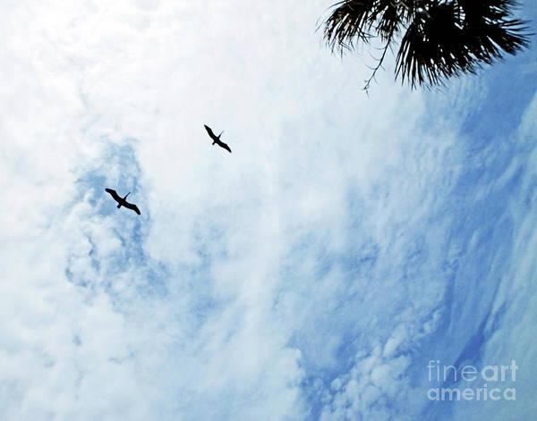 Photograph - Soar by Lizi Beard-Ward