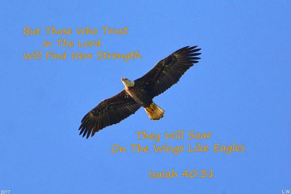 Soar On The Wings Like Eagles Isaiah 40 31  Art Print