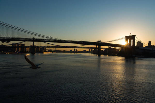 Photograph - Soaring - Brooklyn Bridge Sunrise With A Seagull by Georgia Mizuleva