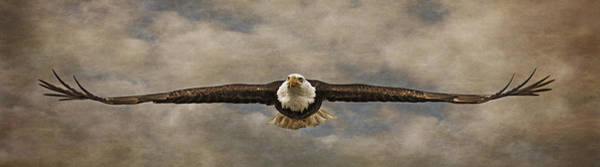 Photograph - Soaring by Wes and Dotty Weber