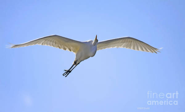 Photograph - Soaring Grace by Deborah Benoit