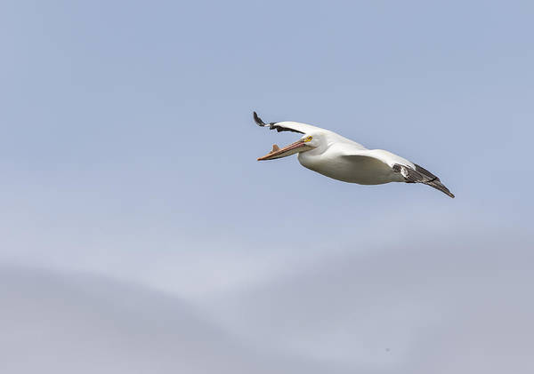 Photograph - Soaring In The Skies by Thomas Young