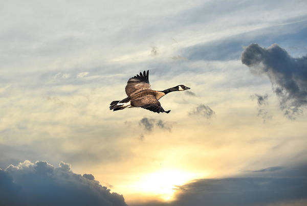 Photograph - Soaring Over A Sunset by Patrick Wolf