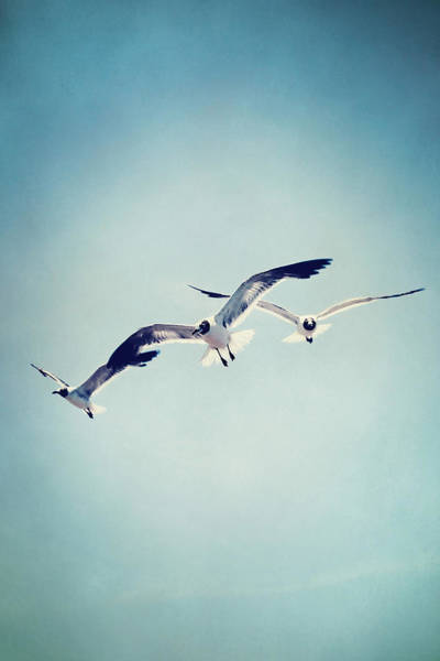 Photograph - Soaring Seagulls by Trish Mistric