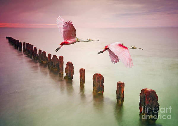 Piling Photograph - Soaring Spoonbills by Laura D Young