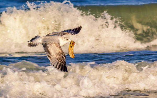 Saint Augustine Beach Wall Art - Photograph - Soaring With Appeal by Rob Sellers