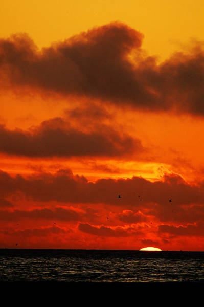 Photograph - Socal Sunset by Clayton Bruster