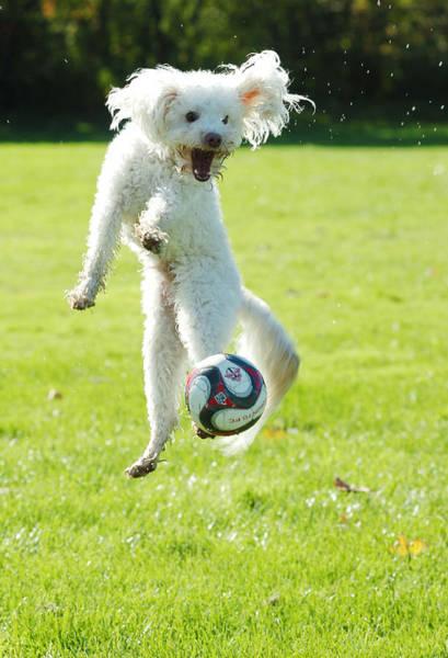 Soccer Dog-5 Art Print