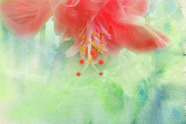 Photograph - Sofly Colored by Judy Hall-Folde