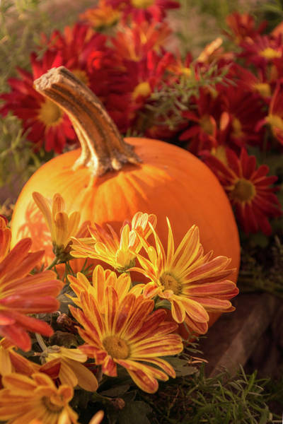 Photograph - Soft And Colorful Thanksgiving Still Life by Georgia Mizuleva