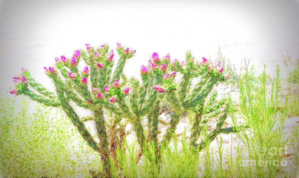 Photograph - Soft Bloom by Jon Burch Photography