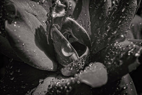 Photograph - Soft Bw Flower by Bill Posner