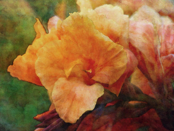 Photograph - Soft Canna 4288 Idp_2 by Steven Ward