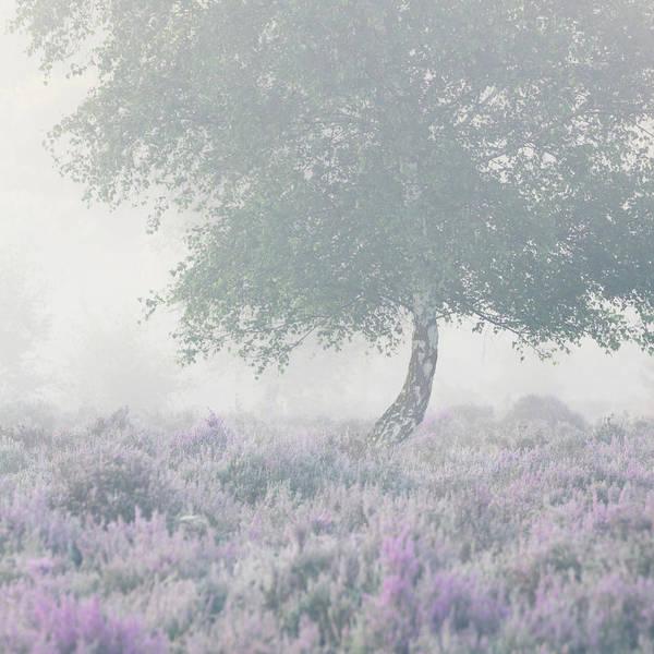Heath Photograph - Soft by Chris Dale