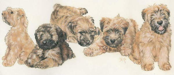 Wall Art - Mixed Media - Soft-coated Wheaten Terrier Puppies by Barbara Keith
