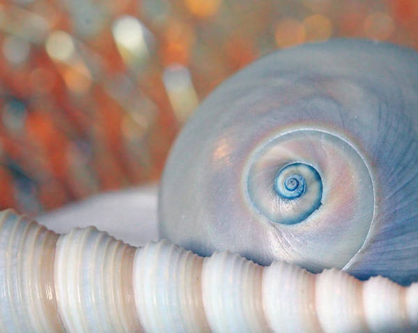 Photograph - Soft Colored Shells by Angela Murdocks