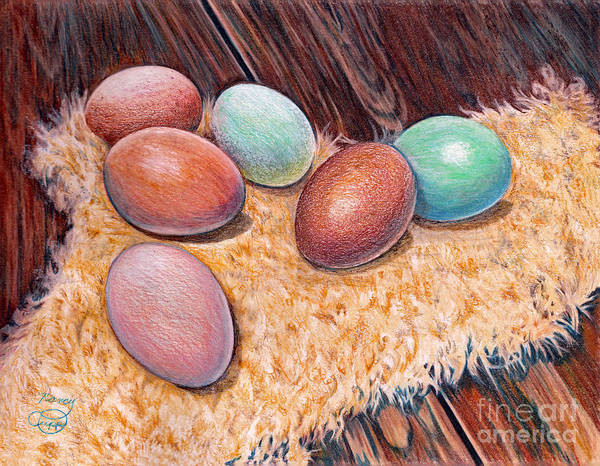 Drawing - Soft Eggs by Nancy Cupp