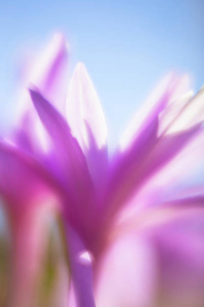 Photograph - Soft Flower by Brian Hale