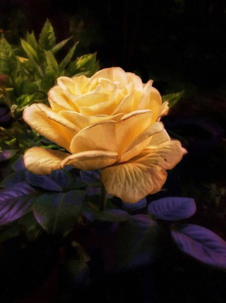 Single Leaf Mixed Media - Soft Gold Rose by Abbie Shores