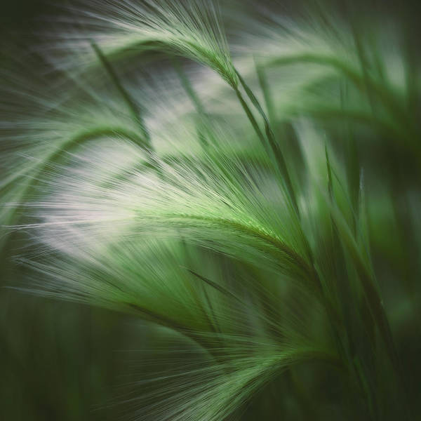 Green Grass Photograph - Soft Grass by Scott Norris
