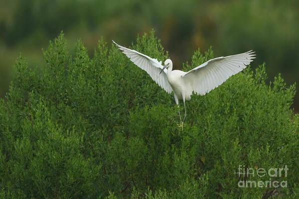 Photograph - Soft Landing by Deborah Benoit