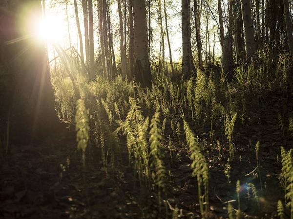 Photograph - Soft Light On The Forest Floor by Ian Johnson