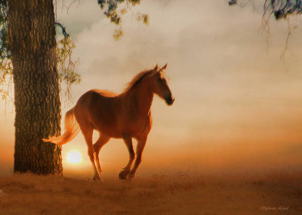 Palomino Photograph - Soft Light by Stephanie Laird