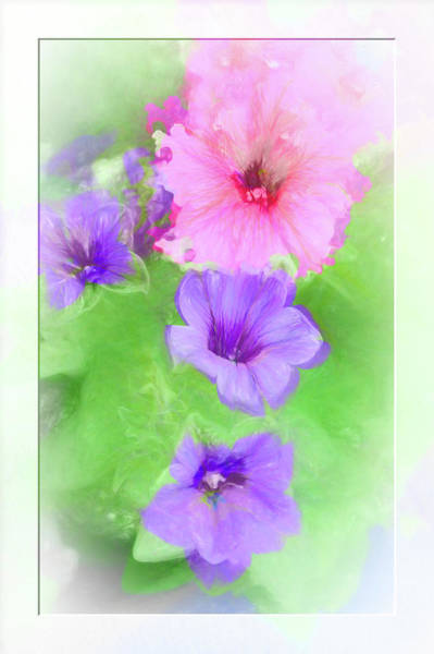 Photograph - Soft Petunias by Natalie Rotman Cote